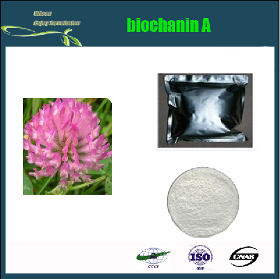 Biochanin A powder 98% Natural Red Clover Extract