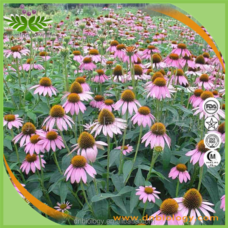 High Quality Echinacea Extract / Echinacea Purpurea Extract / Polyphenols with free sample