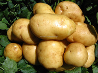 Fresh delicious potatoes very Suitable price