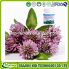 women health supplement Red Clover Extract /Trifolium pretense extract powder/Red Clove P.E.