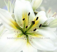 white Lily flower printed canvas, photo printed on canvas