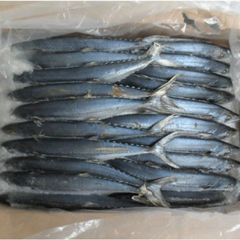 China made Frozen Spanish Mackerel fish