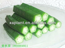GMP Manufacturer High Quality &100% natural organic frozen okra whole