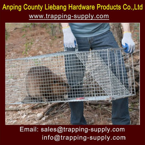 Giant Live Trap Dog Bobcat Large Raccoon cage trap fox and badger trap