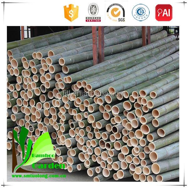 Giant bamboo sticks wholesale buy