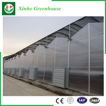High Quality Multi-span commercial Tunnel Poly Film Greenhouses for tomato planting