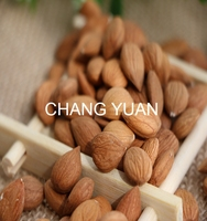 Raw sweet apricot kernels type of almond nuts in shell