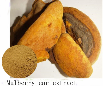 Mulberry Ear Extract is health care medicine and it is natural herbal plant