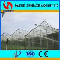 Multi Span Steel Pipe Greenhouse For Plants Growing