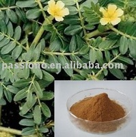 100% Natural Tribulus Terrestris P.E./CAS No.: 18642-44-9
