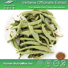 Natural Free Sample Herbal Supplement Vervain Extract Herba Verbenae Extract Powder