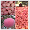 High quality exporting new fresh red fuji apple in fruit market price