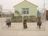 popular steel mesh wire galvanized outdoor large dog cages