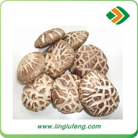 Chinese natural dried shiitake mushroom with carton package