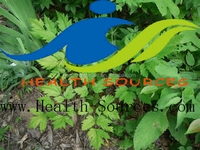 Black Cohosh Extract as a friend of woman help you against pains by menstruation