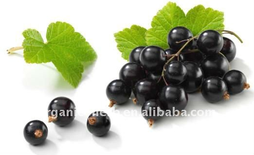 Black Currant Extract-25% Anthocyanidins