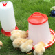 3KG 6KG 10KG Thicken plastic manual poultry feeder chicken feeder