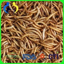 Wholesale Price, Mealworms Dried Bulk