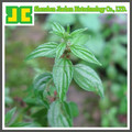 High quality Nettle Leaf P.E