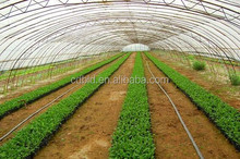 Poly Tunnel Agricultural Greenhouse