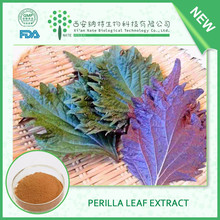 Top quality Natural Dried Perilla Leaf Extract Perillae Folium Extract with free sample