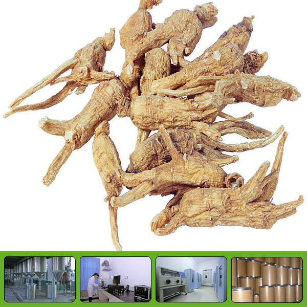 GMP factory supply high quality plant extract angelica
