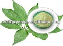 top quality Notoginseng Leaf Triterpenes 95%