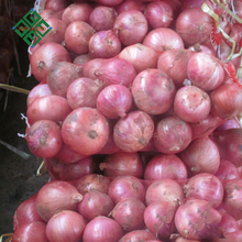 sale big fresh red onions