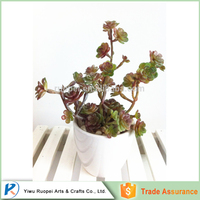 wholesale ornamental plants Small white porcelain plastic succulent plant bonsai