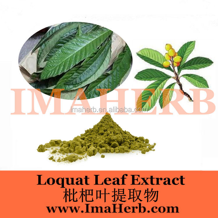 Best Sell Made in China loquat leaf extract