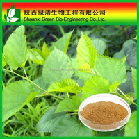 Hot sale Mulberry leaf P.E. Morus alba extract