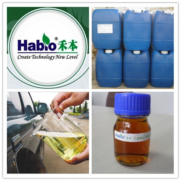 Habio Specialized Lipase Enzyme for Biodiesel