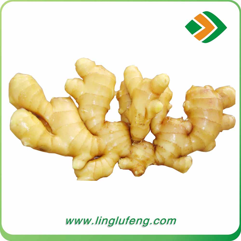 New style chinese fresh ginger 150g products