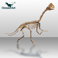 OA25810 Amusement Park Life Size Real Dinosaur Skeleton For Sale
