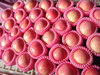 Bulk packing 2015 Fresh red fuji apples from China