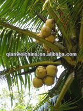 industrial economical young coconut water process