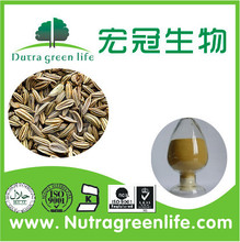 Pure natural fennel seed,Best selling fennel seed extract 10:1