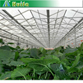 Multi span vegetable corrugated cellular polycarbonate sheet greenhouse