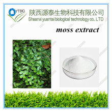 100% Natural Club Moss Extract