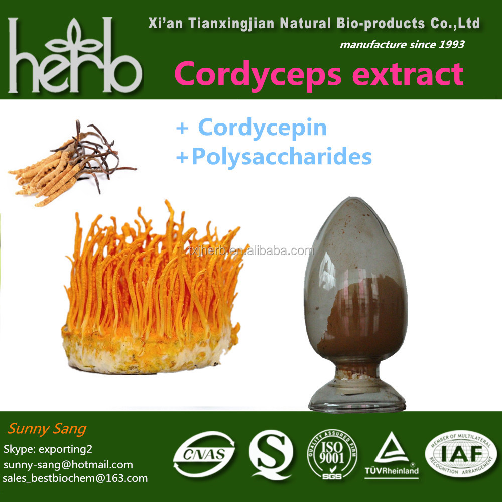 Anticancer Supplement wild cordyceps extract Cordycepin Powder