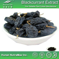 100% Natural Black Currant Extract, Black Currant Fruit Extract, Blackcurrant Extract