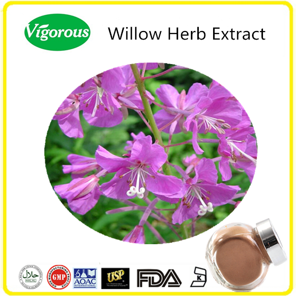 Pure natural Willow Herb Extract/Willow Herb Extract Powder/Epilobium conspersum powder