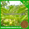 High Quality Natural fruit extracts/Acerola cherry extract powder/cherry extract