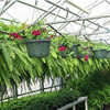 Single Span Hoop Hydroponics Greenhouse For