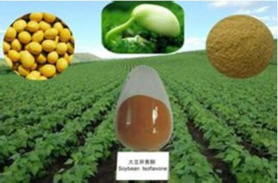 Organic Soybean Extract Soy Isoflavone Powder . bulk suppliers