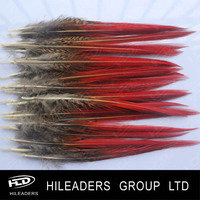 Golden pheasant tail red tip feather