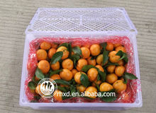 Fresh Citrus Fruit // mandarin <strong>oranges</strong> // tangerines