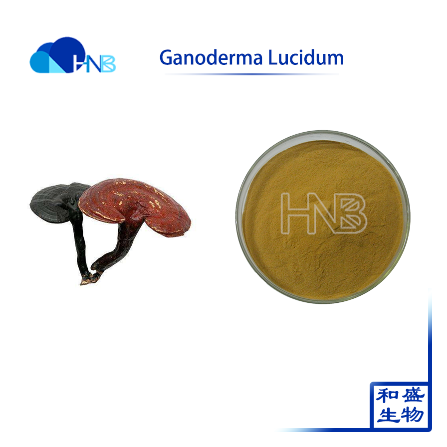 Hot sell 100% natural organic Ganoderma Lucidum Extract