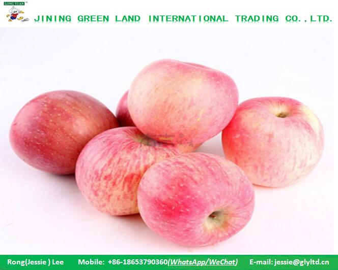 HAND SELECTED SUPER QUALITY FUJI APPLE PRODUCTION SUPPLY ALL YEAR ROUND