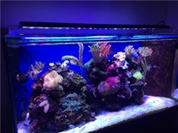 Wifi remote control full spectrum marine coral reef sunrise sunset simulation 60 inch led aquarium light